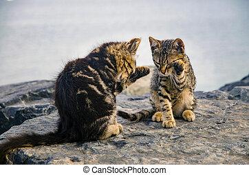 cute, praia, gatos, rocks., gatinhos
