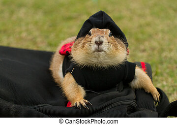 Cute prairie dog dress up with hat lying on bag