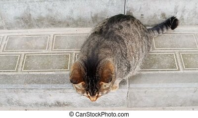Cute Pregnant Cat On Paved Surface Of The Street Looking Up...