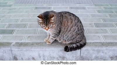 Cute Pregnant Moggy On Paved Surface Pedestrian Walking Near