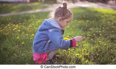 Cute pretty girl making bouquet of dandelions on a sunny day. Beautiful little lady choosing best flowers.