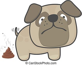 dog pooping - cute pug dog pooping isolated on white...