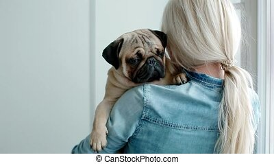 Cute pug on the owners hands. Young woman pet her little...