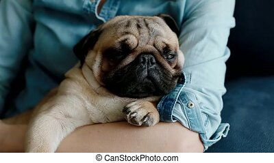 Cute pug sleeping on the owners hands.