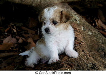 Cute Puppy - A small cute puppy resting by a tree in...