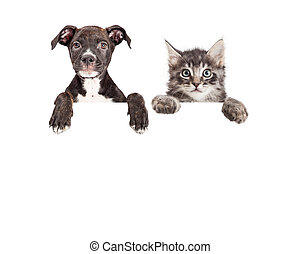 Cute Puppy And Kitten Hanging Over White Banner