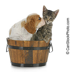 puppy and kitten - cute puppy and kitten sitting in wooden...