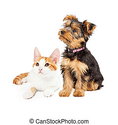 Cute Puppy and Kitten Sitting to Side