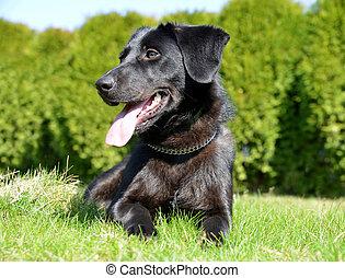 Cute puppy crossbreed dog in grass.