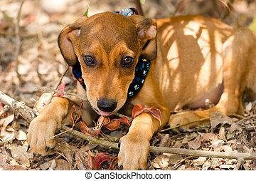 Cute Puppy Dog Cute Puppy Dog Is A Very Cute Beige Puppy Looking As