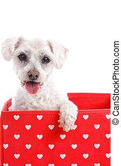 Cute puppy dog in a red love heart box