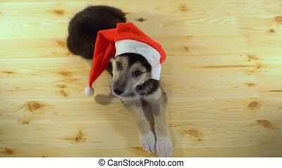 Cute puppy dog in Santa hat lies on the wooden floor.