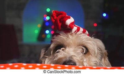 Cute puppy dog in small Christmas hat staying behind the table and look forward