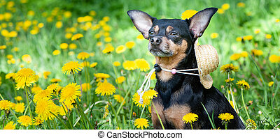 Cute puppy, dog in spring yellow colors on a flowered meadow, portrait of a dog. Spring summer theme
