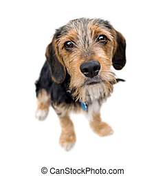 Cute Puppy Dog Sitting - A cute mixed breed puppy isolated ...