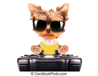 dog wearing a shades play on game pad - cute puppy dog...