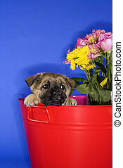 Cute puppy in bucket.