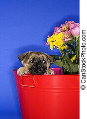 Cute puppy in bucket.