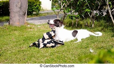 Cute Puppy Playing in Green Grass on a Summer Day.