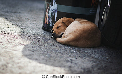 Cute Puppy Sleeping in front of the Car.