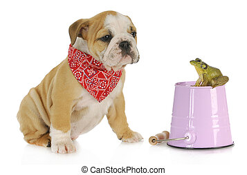 cute puppy with bullfrog