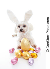 Cute puppy with bunny ears easter eggs