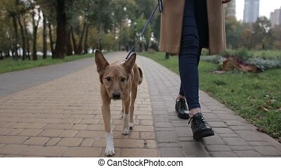Cute puppy with owner walking in autumn park - Closeup...