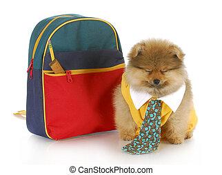 cute puppy with school bag