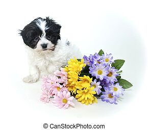 Cute Puppy with Spring Flowers
