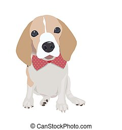 Cute Queen Elizabeth Pocket beagle