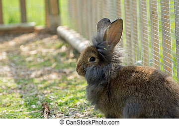 Cute rabbit bunny in the garden
