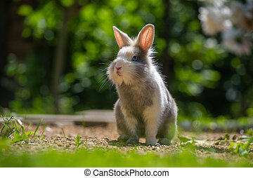 Cute Rabbit Outdoors - A cute fluffy gray and white rabbit...
