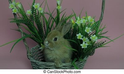 Cute rabbit sitting in a basket flowers on pink