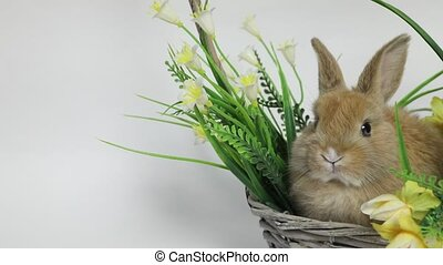 Cute rabbit sitting in a basket flowers on white