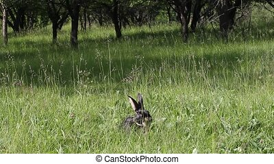Cute rabbit sitting in the grass and washes