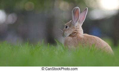 Cute rabbit sitting in the grass