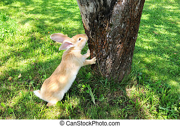 Cute Rabbit Standing on Hind Legs - A cute red rabbit...