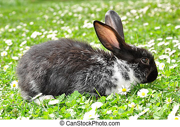 Cute Rabbit in Grass