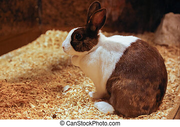 Cute rabbit with white and brown fur is stitting