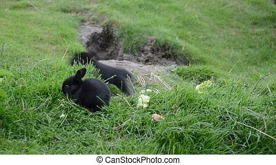 Cute rabbits sitting on grass
