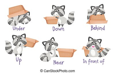 Cute Raccoon with Striped Tail and Carton Box as Prepositions of Place Demonstration Vector Set