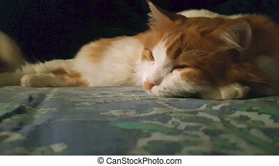 Cute red and white cat sleeping in the dark