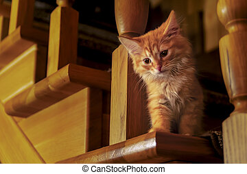 Cute red cat kitten sitting on wooden staircase in country house. Cute curious tabby cat with amber eyes scurries down the stairs. Cozy evening