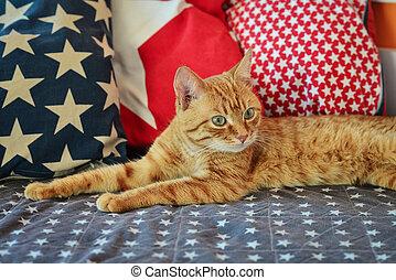 Cute red cat lying