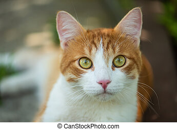 Cute red cat with green eyes close-up