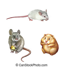 Cute red Hamster sitting, House mouse eating piece of cheese...