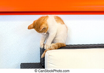Cute red striped and white cat kitten playing