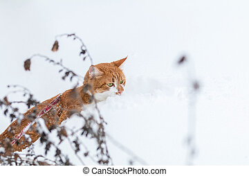 Cute red-white cat playing on white snow surface. Beautiful...