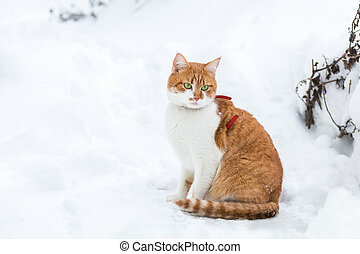 Cute red-white cat playing on white snow surface