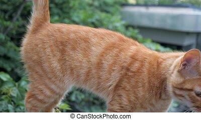 cute redhead cat at street. homeless cat looking at camera....